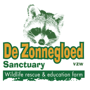 Zonnegloed